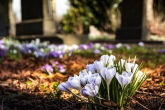graveyard, university